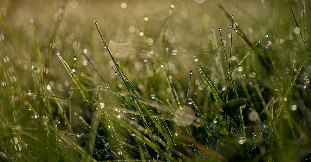 Day 1 on the Mining Pi Blog features an image of dew on morning grass by Aaron Burden