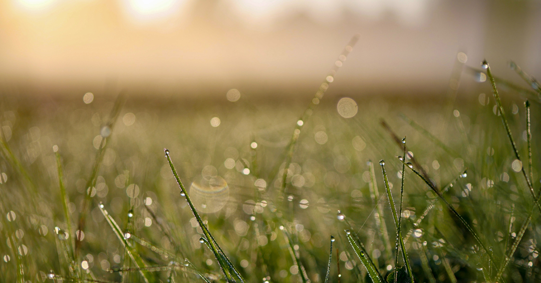 Day 2 on the Mining Pi Blog features an image of dew on morning grass by Aaron Burden